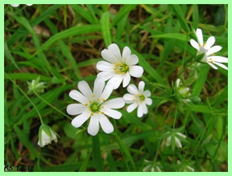 kukkia_04.jpg