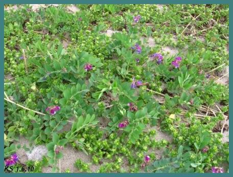 kukkia_07.jpg