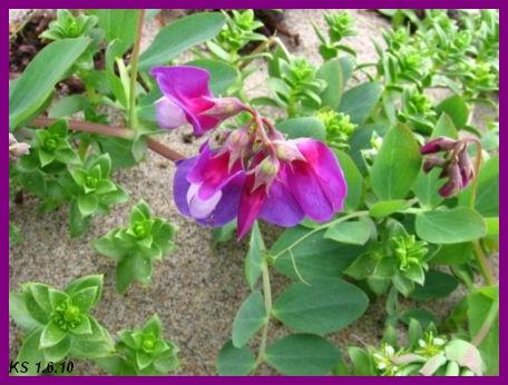 kukkia_08.jpg