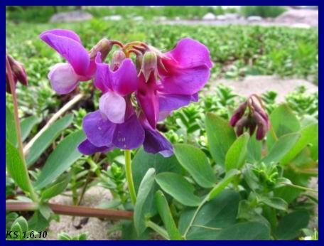 kukkia_10.jpg