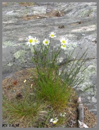 kukkia_11.jpg