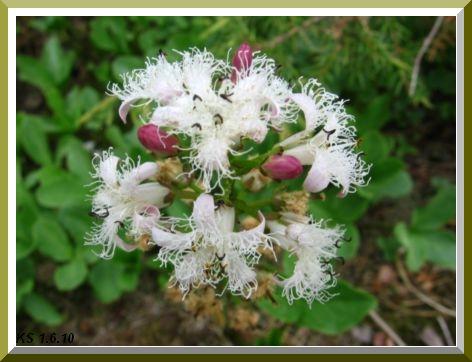 kukkia_12.jpg