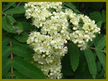 kukkia_13.jpg