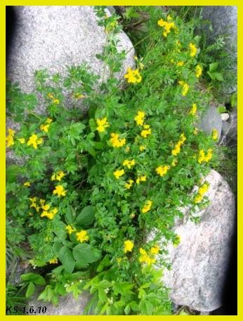 kukkia_14.jpg