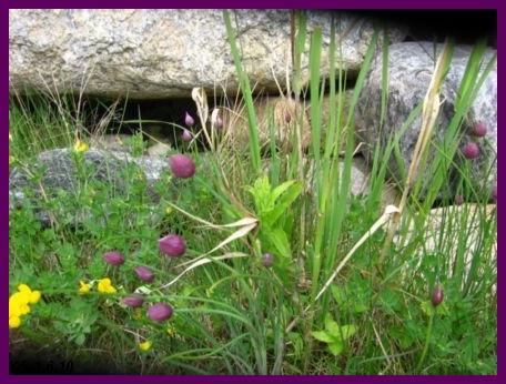 kukkia_17.jpg