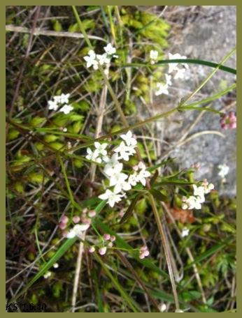 kukkia_27.jpg