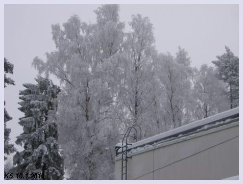 Talvi_01.jpg