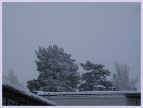 Talvi_03.jpg