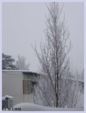 Talvi_06.jpg